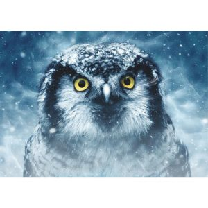 Deico Games 1000 db-os puzzle - Owl - 75727