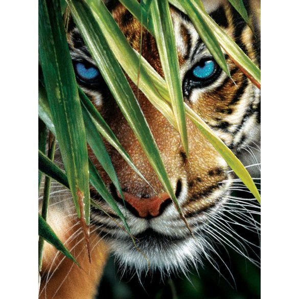 Sunsout 1000 db-os puzzle - Collin Bogle - Blue Eyes 21843
