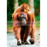 Trefl Nature Limited Edition - Orangután 1000 db-os puzzle (10514)